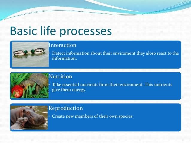 Living things maria moya Slide 3