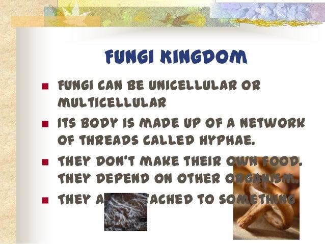 Like The Sunflowers 15 Fungi Kingdom