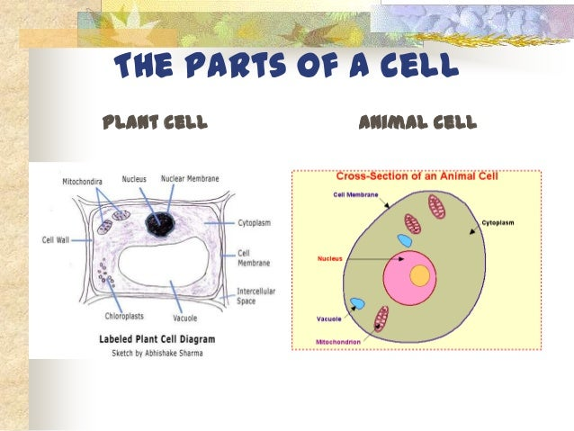 A group of similar cells that work together