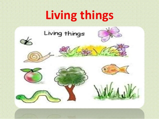 Https Www Slideshare Net Mahahussain Living Things And Their Needs