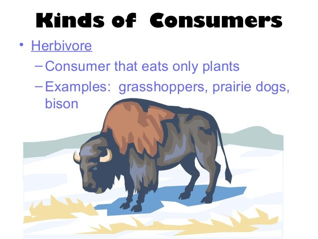 Do Prairie Dogs Eat Grasshoppers