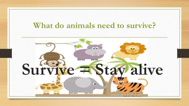 what living things need to survive
