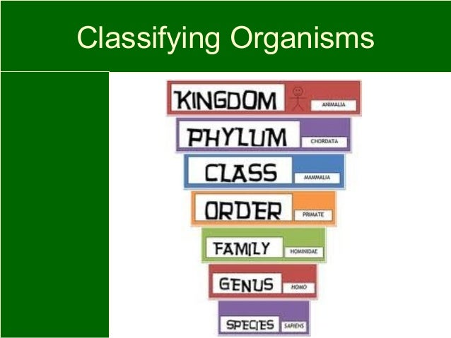 Living things classification – Classifying Organisms Worksheet