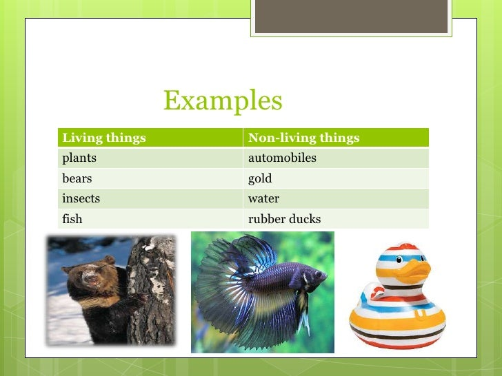 Three examples of unreliable medical resources Essay Sample