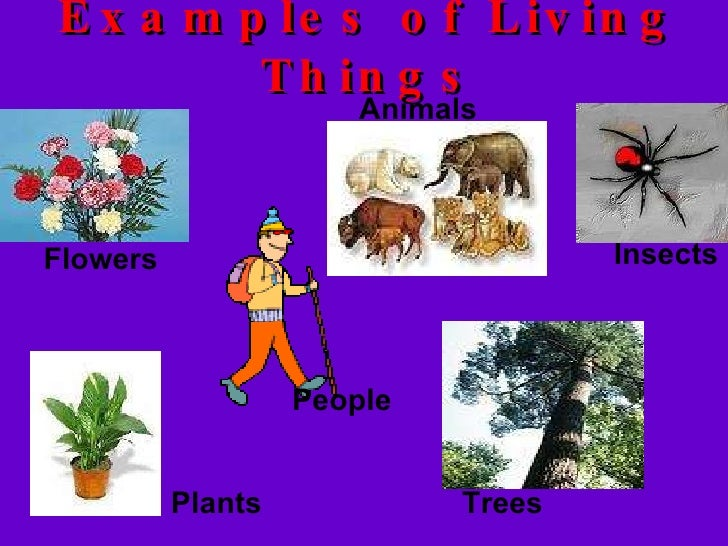 Ppt this is for iii std chapter living and non-living.
