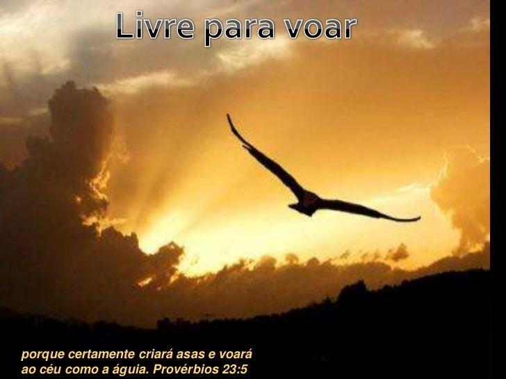 Livre para voar<br />porque certamente criará asas e voará ao céu como a águia. Provérbios 23:5<br />