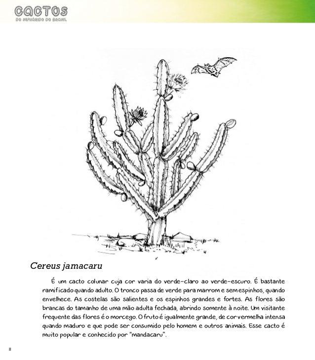 Cactos Do Semiarido Do Brasil
