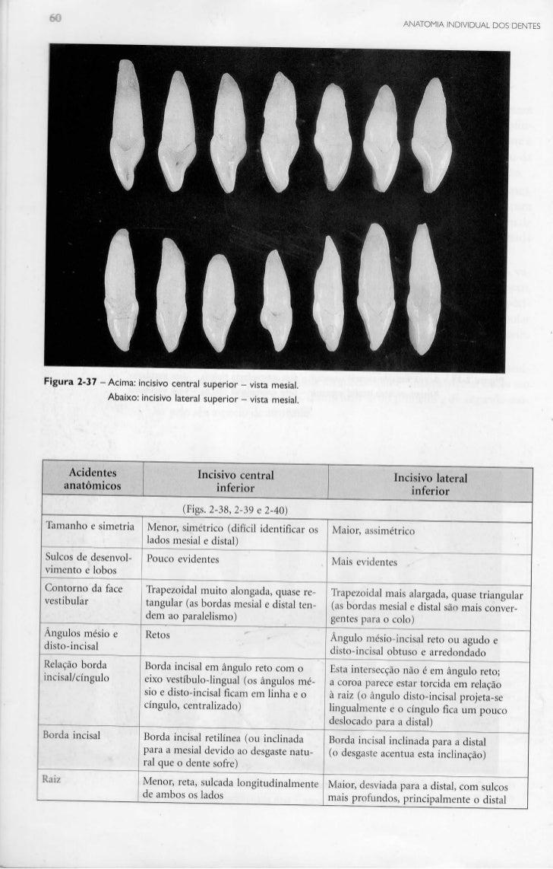 Livro: Anatomia do dente