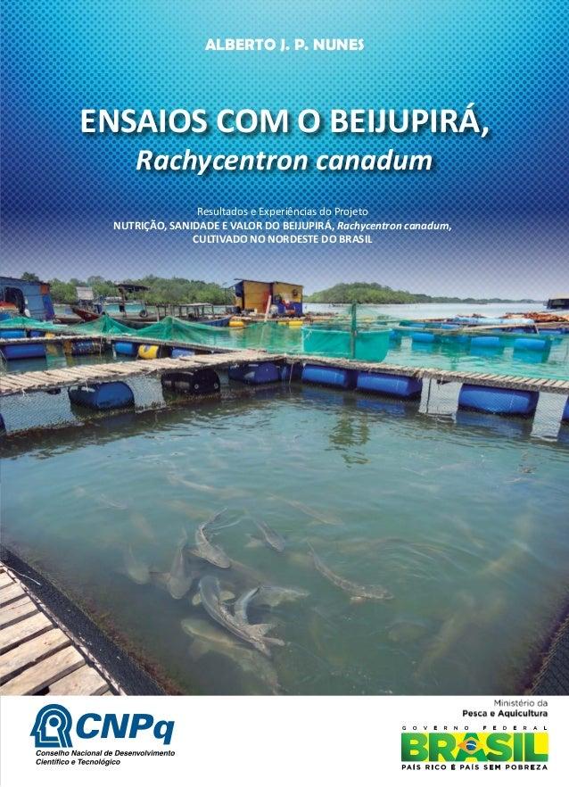 ENSAIOS COM O BEIJUPIRÁ, Rachycentron canadum ALBERTO J. P. NUNES Resultados e Experiências do Projeto NUTRIÇÃO, SANIDADE ...