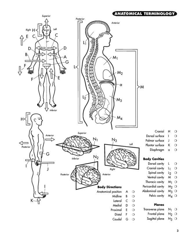 Livro de anatomia completo