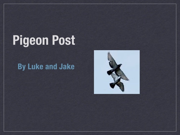 Pigeon Post By Luke and Jake
