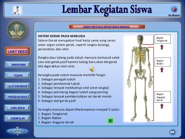 SISTEM GERAK PADA MANUSIA Sistem Gerak merupakan hasil kerja sama yang serasi antar organ sistem gerak, seperti rangka (tu...