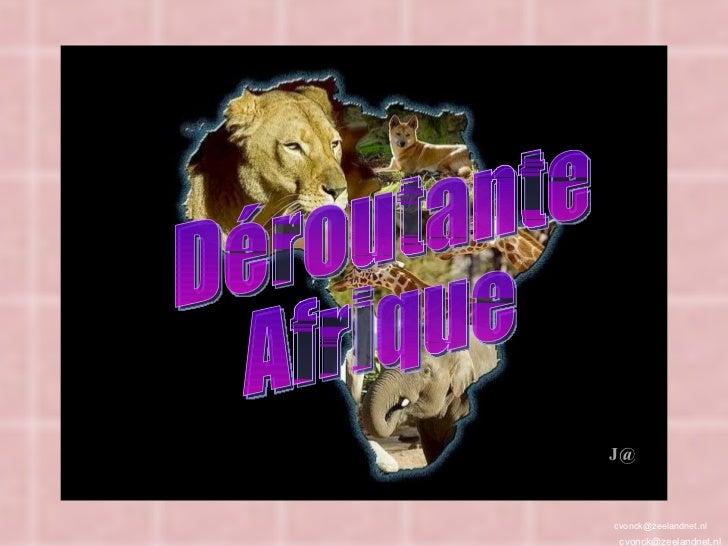 [email_address] [email_address] J@ Déroutante Afrique
