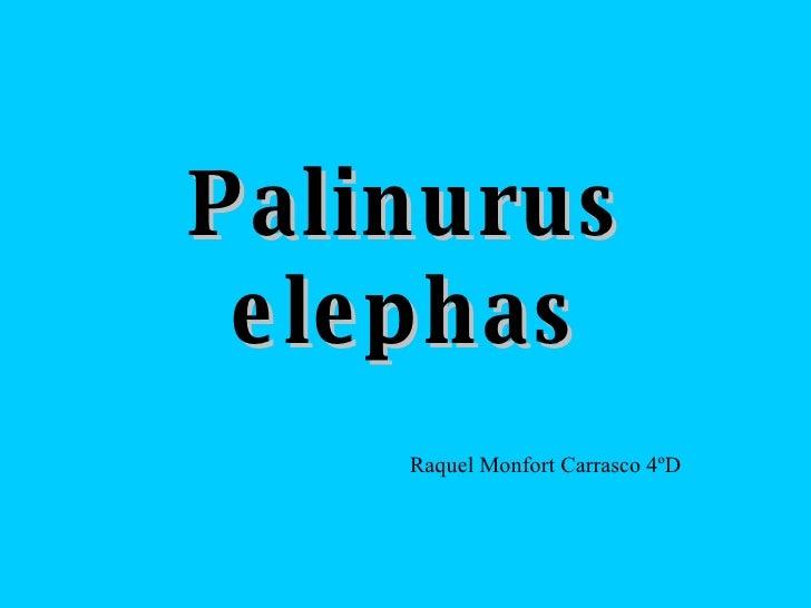Palinurus elephas Raquel Monfort Carrasco 4ºD