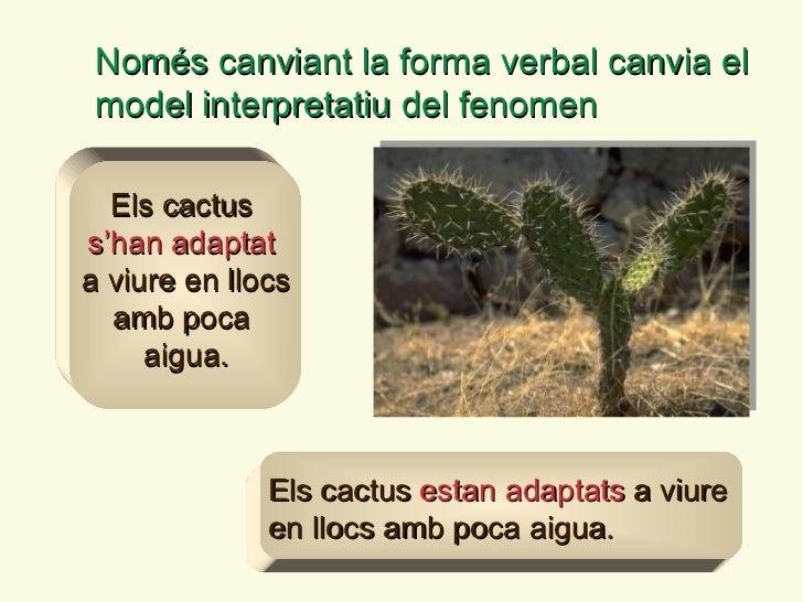 Només canviant la forma verbal canvia el model interpretatiu del fenomen Els cactus   estan adaptats   a viure en llocs am...