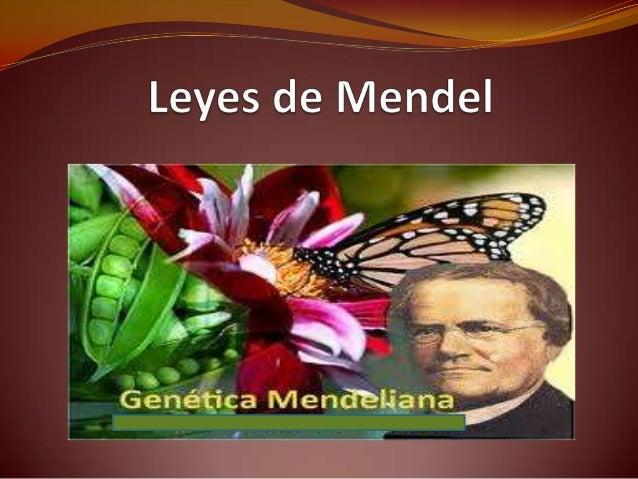 1ª Ley de Mendel  Principio de la uniformidad de híbridos en F1                                   A representa al gen     ...