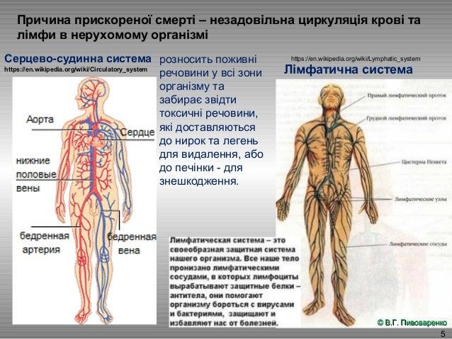 5 Причина прискореної смерті – незадовільна циркуляція крові та лімфи в нерухомому організмі Серцево-судинна система Лімфа...