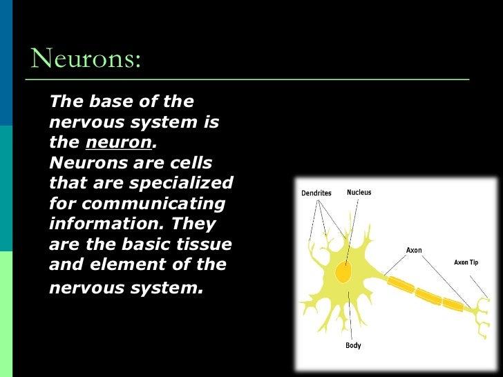 Neurons the basic elements of behavior