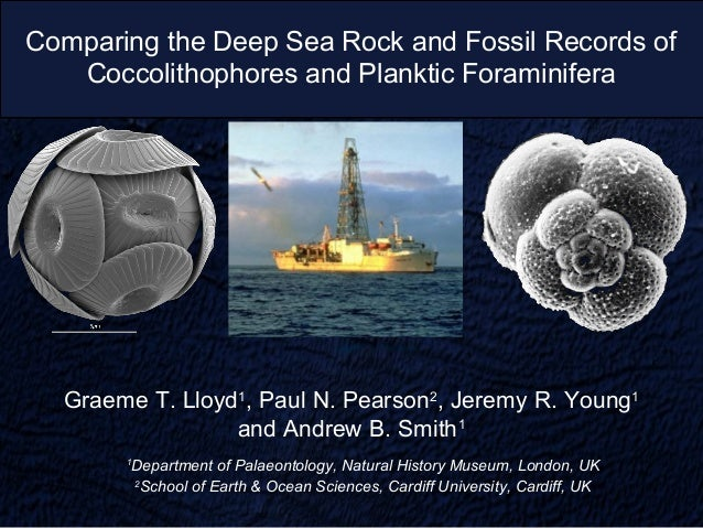 Comparing the Deep Sea Rock and Fossil Records of   Coccolithophores and Planktic Foraminifera  Graeme T. Lloyd1, Paul N. ...