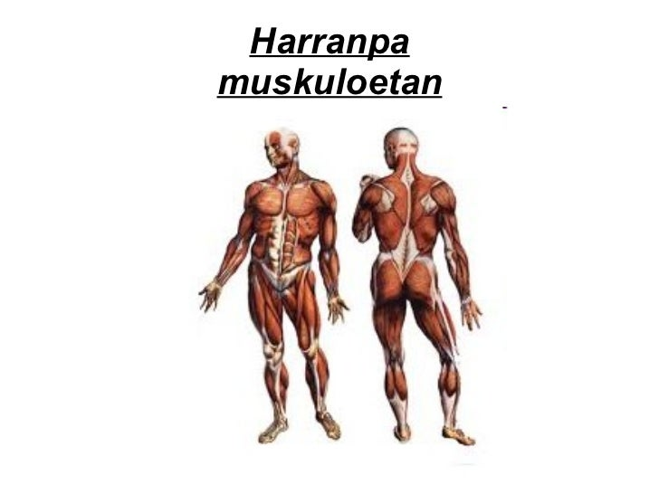 Harranpa muskuloetan