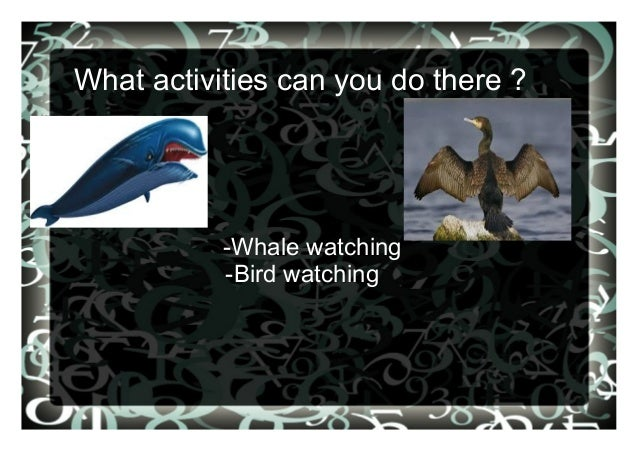 What activities can you do there ? -Whale watching -Bird watching