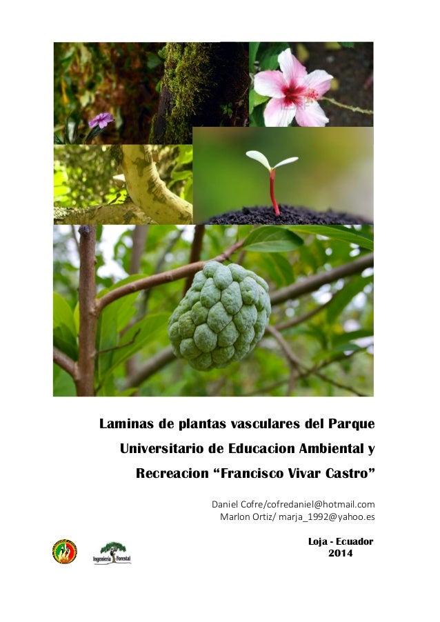 L minas de especies vasculares del puear for Plantas forestales
