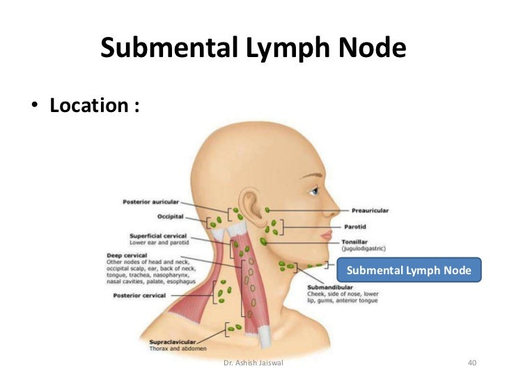 Diagram of lymph nodes cheek data set lymphatic system cervical lymph nodes by dr ashish jaiswal rh slideshare net cheek swelling lymph nodes lymph nodes under jaw ccuart Gallery