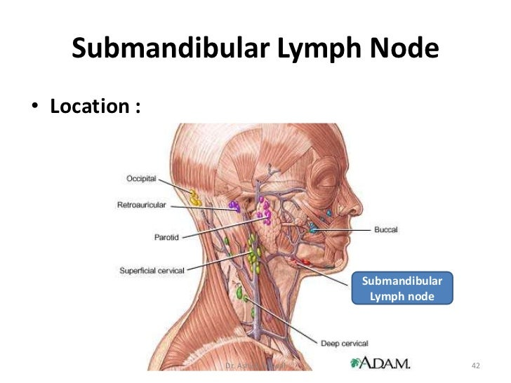 Lymphatic System Cervical Lymph Nodes By Dr Ashish Jaiswal