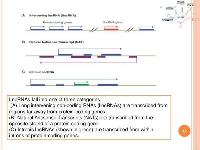 LncRNA (Long noncoding RNA)