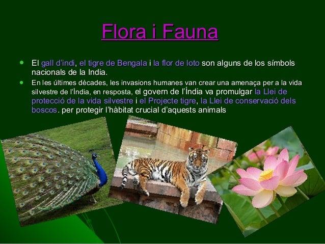 Flora i Fauna   El gall d'indi, el tigre de Bengala i la flor de loto son alguns de los símbols nacionals de la India.  ...