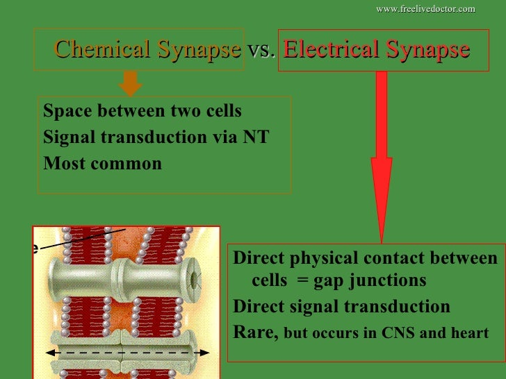 Electrical Vs Chemical