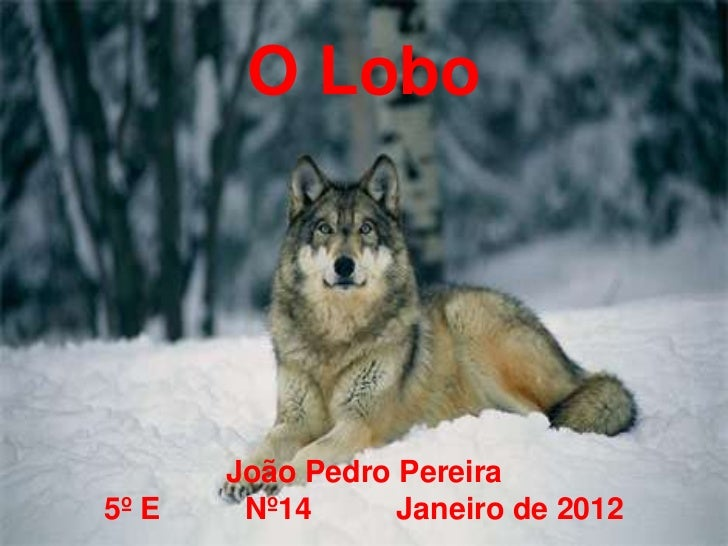 O Lobo       João Pedro Pereira5º E    Nº14      Janeiro de 2012