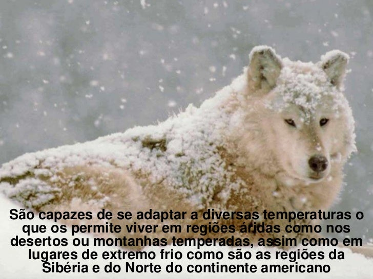 Regiões em que habitaSão capazes de se adaptar a diversas temperaturas o que os permite viver em regiões áridas como nosde...