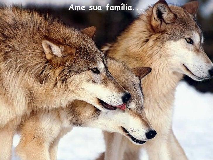 Ame sua família...