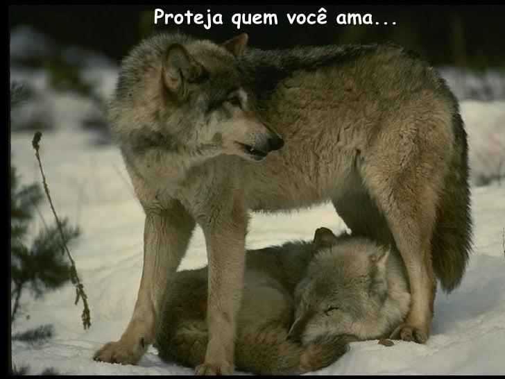Proteja quem você ama...