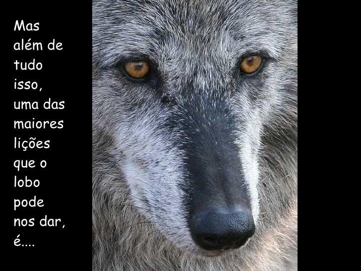 Mas além de tudo isso, uma das maiores lições que o lobo pode nos dar, é....