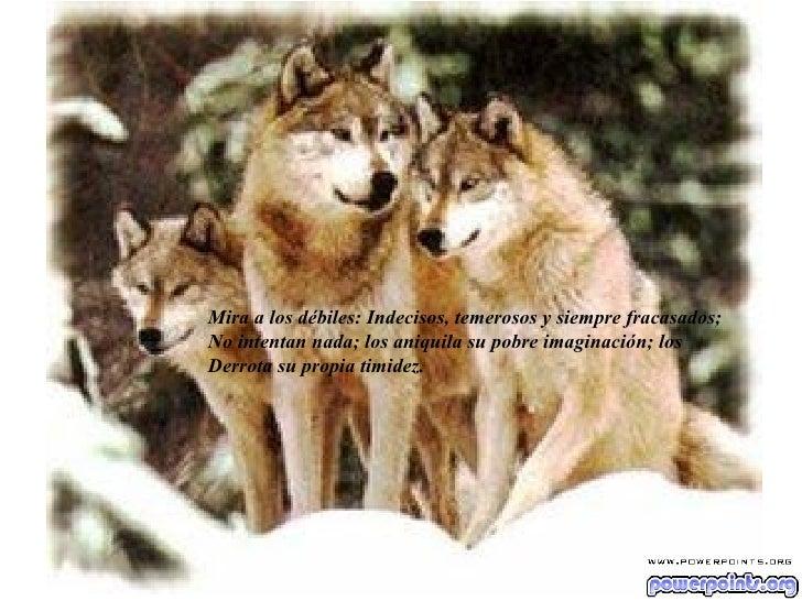 Mira a los débiles: Indecisos, temerosos y siempre fracasados; No intentan nada; los aniquila su pobre imaginación; los De...