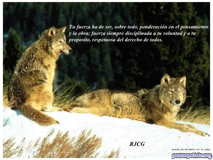 Tu fuerza ha de ser, sobre todo, ponderación en el pensamiento  y la obra; fuerza siempre disciplinada a tu voluntad y a t...