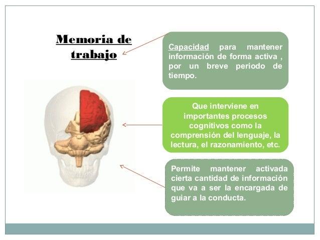 LOBULO FRONTAL: BASES NEUROANATOMICAS Y FISIOLOGICAS