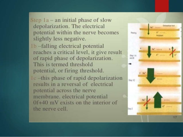 Effect of PH  Local anesthetics are weak bases and are usually formulated as the hydrochloride salt to render them water-...
