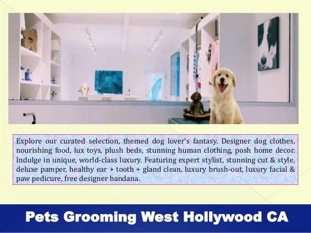 Local Dog Groomers