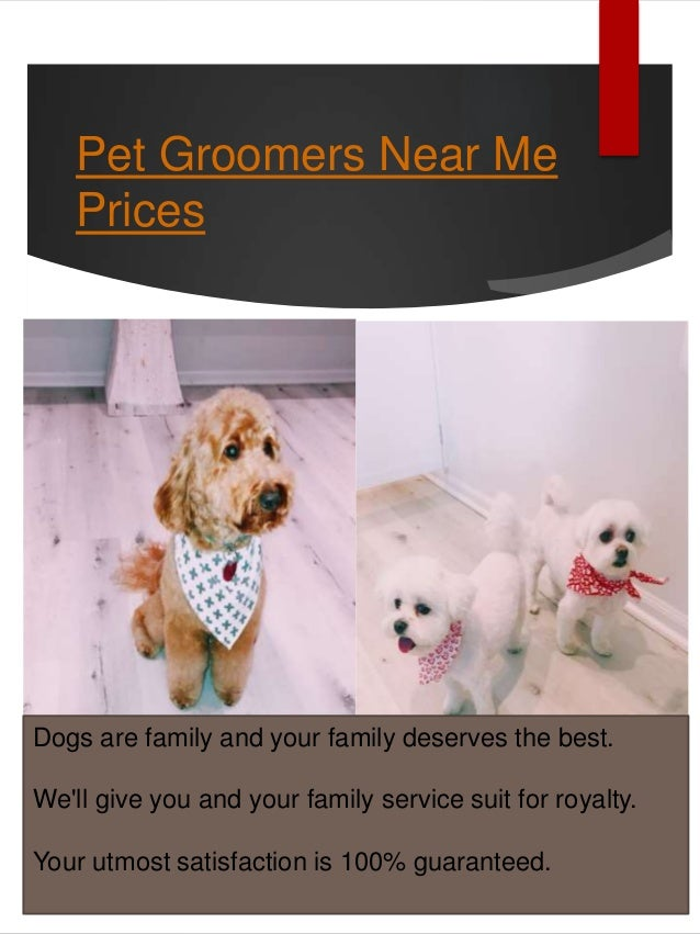 Local Dog Groomers Near Me
