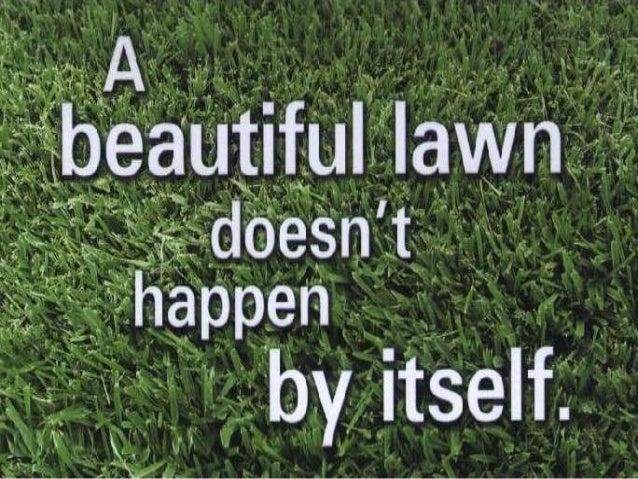 Local Edge Lawn Care