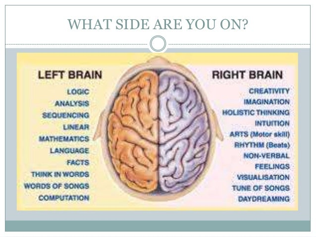 localisation of brain function essay help