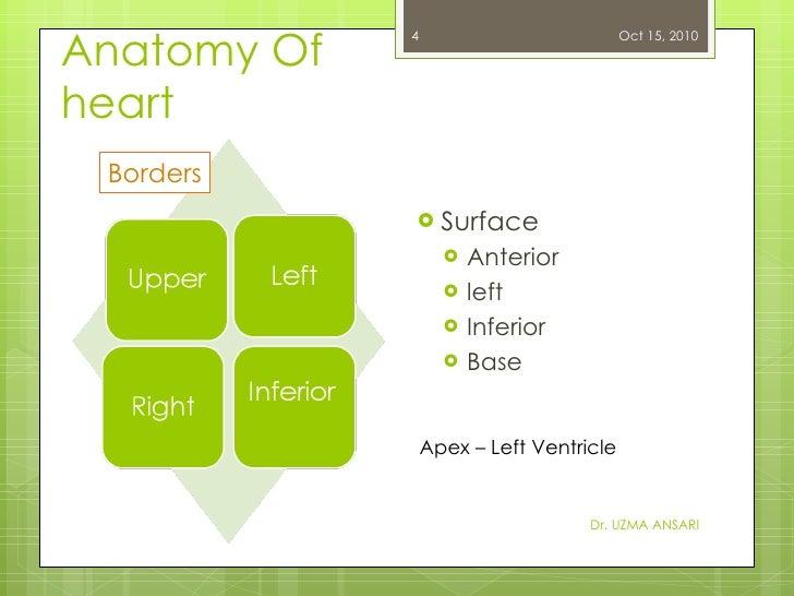 Anatomy Of heart <ul><li>Surface </li></ul><ul><ul><li>Anterior </li></ul></ul><ul><ul><li>left </li></ul></ul><ul><ul><li...
