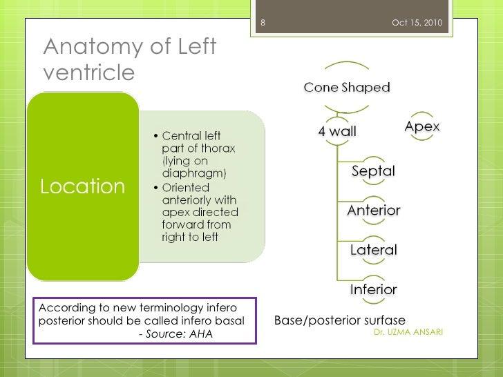 Anatomy of Left ventricle Dr. UZMA ANSARI According to new terminology infero posterior should be called infero basal -  S...