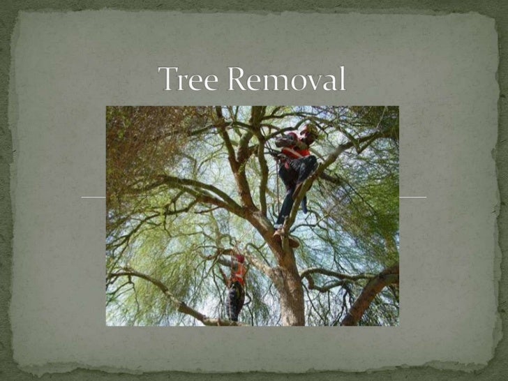 Tree Removal<br />
