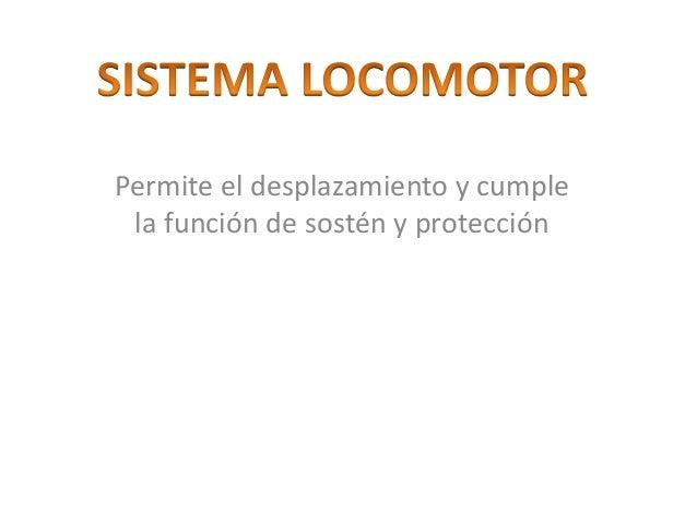 Permite el desplazamiento y cumple la función de sostén y protección