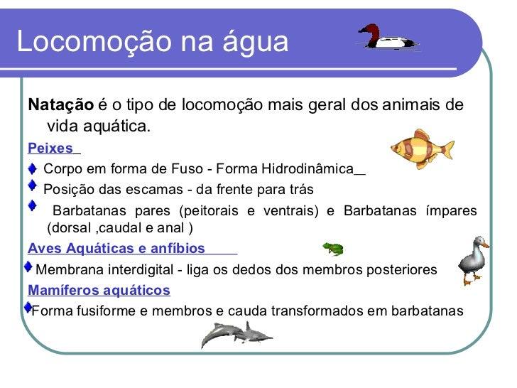 Locomoção na água <ul><li>Natação  é o tipo de locomoção mais geral dos animais de vida aquática. </li></ul><ul><li>Peixes...
