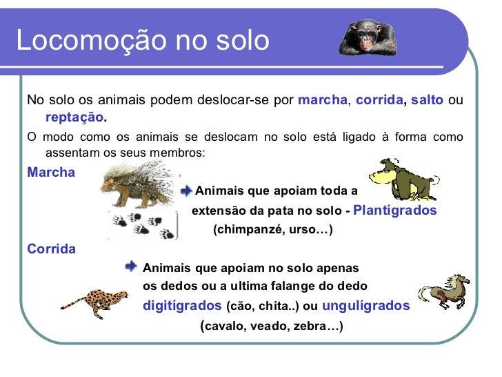 Locomoção no solo  <ul><li>No solo os animais podem deslocar-se por  marcha ,  corrida ,  salto  ou  reptação . </li></ul>...